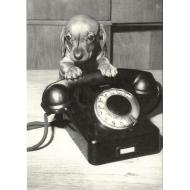 carte postale chiot teckel poil ras en noir et blanc