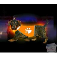 Gilet de sécurité pour chien SAFETY DOG taille teckel marque Karlie